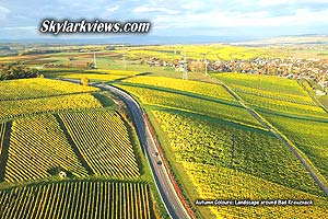 yellow vineyards